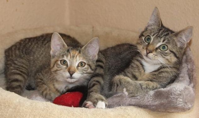 zwei kleine getigerte Katzen liegen auf einem Katzenkissen