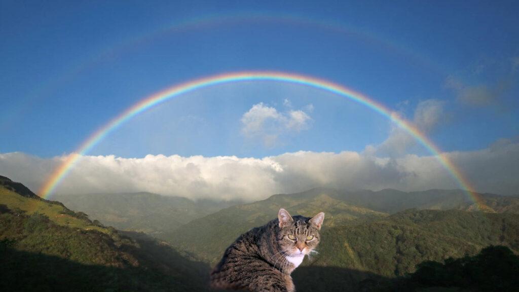 eine getigerte Katze, im Hintergrund eine Berglandschaft, darüber Wolken und blauerHimmel mit Regenbogen