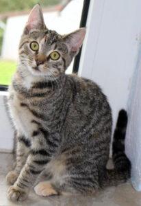 kleine getigerte Katze sitzt auf einer Fensterbank, schaut in die Kamera