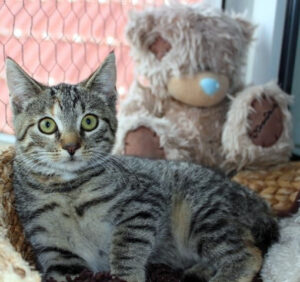 kleine getigerte Katze liegt auf einer Fensterbank, vor einem großen Plüschbären