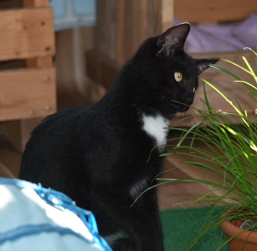 schwarzer Kater neben einem Blumentopf mit Gras, schaut auf das Gras